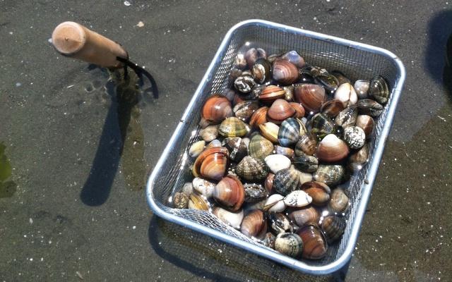 千葉県の子どもと行ける潮干狩り穴場スポットBEST3はコチラ☆