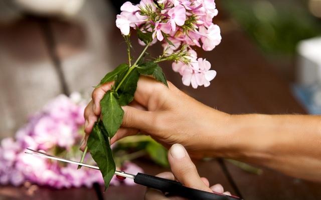 切り花を少しでも長持ちさせる方法は?薬なしでのコツを教えます!
