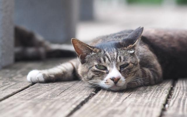 猫 熱中症