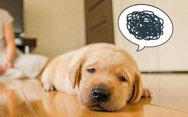 犬が夏バテかもと思う症状が出たら対策はコレ!おすすめの食事も♪