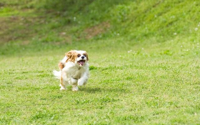 犬の夏バテ