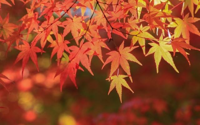 紅葉狩りを東京でするならこのスポット!見頃はいつから?夜もよし♪