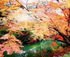紅葉の有栖川公園