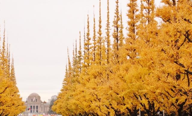 紅葉 銀杏並木