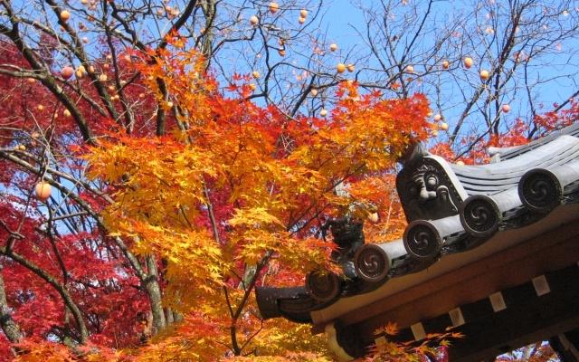 京都嵐山常寂光寺