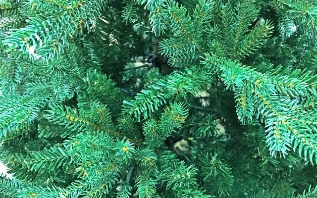 もみの木の防虫