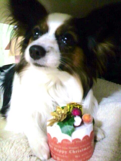 クリスマスケーキをペットが食べてもOKの東京のお店ならどこ?